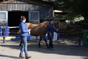 Einzelcoaching mit Pferden I Freiburg im Breisgau