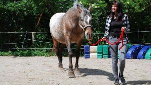 Pferdegestütztes Coaching in Deutschland