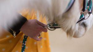 Coachingmoment mit Pferden in Deutschland