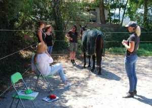 Ausbildungsseminar Pferdegestütztes Coaching