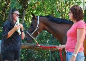 Ausbildung zum Pferdegestütztem Coach