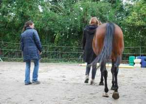 Coaching in Zusammenarbeit mit Pferden