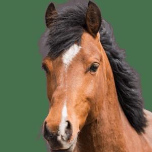 Zertifiziertes Coaching mit Pferd Deutschland