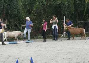 Teamarbeit beim Pferdegestütztem Coaching