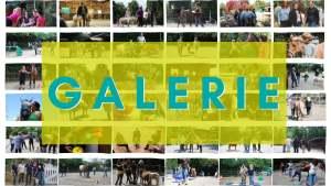 Galerie von Jutta Einhaus - Pferdegestütztes Coaching