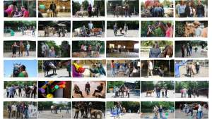 Bilder von der Arbeit als Pferdegestützter Coach in Freiburg