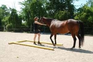 Einzelcoaching mit Pferden in Freiburg