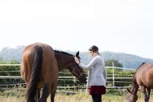 Pferdegestütztes Coaching mit Pferden