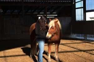 Übung mit Pferden im Einzelcoaching