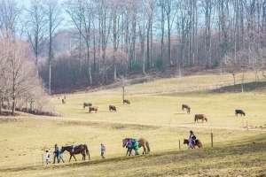 Pferdegestütztes Coaching - Erlebnispädagogik