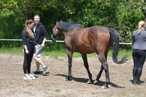 Pferdegestütztes Coaching mit Jugendlichen in Deutschland