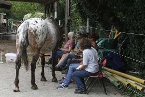 Pferd als Spiegel im Pferdegestütztem Coaching