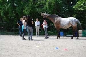 Ausbildung Pferdegestützter Coach Deutschland