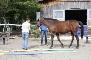 Coching mit Pferden Deutschland