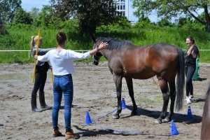 Übungen im Pferdegestütztem Coaching