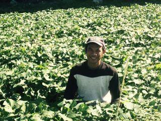 ★有機野菜★寿山は、収穫したその日に発送するのが基本です。