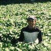 有機野菜の新しい作り手紹介