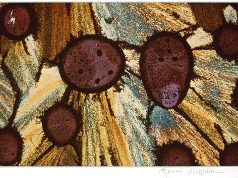 """Amino Acid (00 000),"" ca. 1970 by Roman Vishniac"