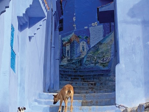 """Chefchaouen, the """"blue city"""" founded in 1491, is in the Rif mountains south of Tangier and one of Morroco's top tourist destinations. (SUE BARNETT)"""