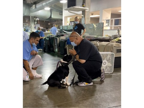 Jon Grobman works with a rescue pup from Paws 4 Life K9 Rescue at California Medical Facility in Vacaville. (Photo/JTA-Courtesy of Rita Earl Blackwell)