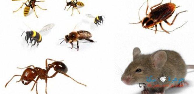أفضل شركة مكافحة حشرات بمكة ورش مبيدات