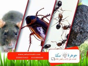 شركة رش حشرات بمكه