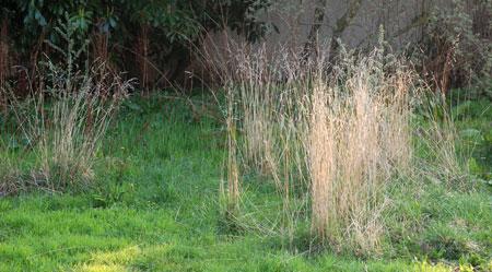 excroissances-de-la-pelouse