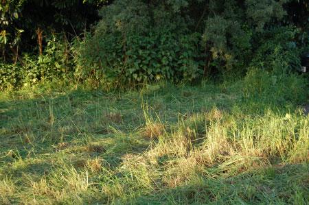 dernier rayon du soleil sur l'herbe coupée