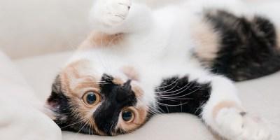 mindfulness stroke a cat