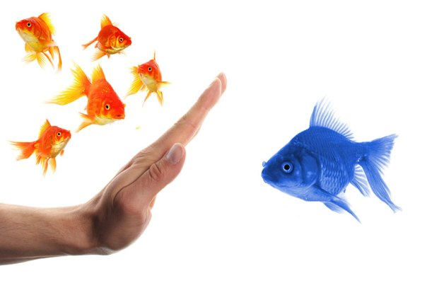 SEO for ecommerce: Outstretched hand keeping large blue goldfish from crowd of smaller orange goldfish