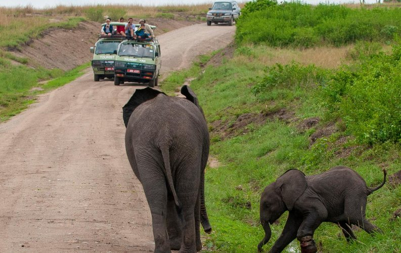 Savannah Wildlife Viewing Game Drives in Uganda