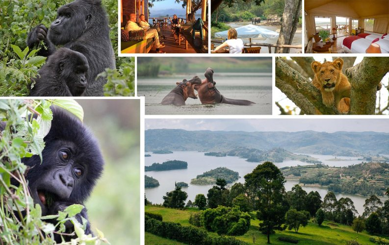 Uganda's Gorillas & Wildlife Adventure