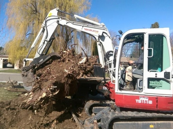 Need a tree stump removed? call K-TERRA Excavation for a free quote