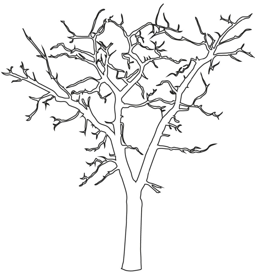 bare tree coloring page usable  k5 worksheets