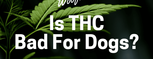 Is THC Bad For Dogs?