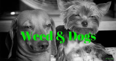 Weed & Dogs
