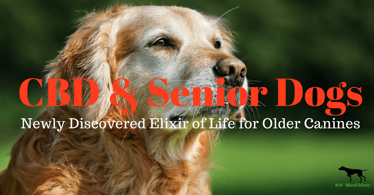 Is CBD good for dogs? CBD for senior dogs