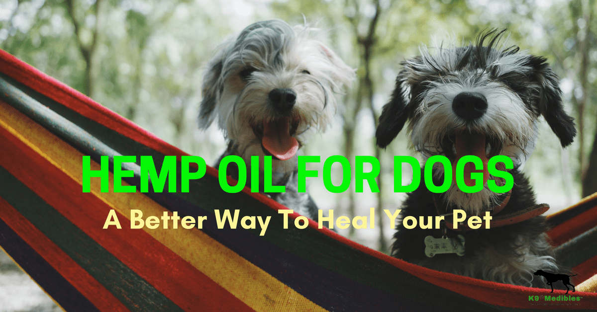 CBD hemp oil for dogs. Hemp and dogs. Cannabis for dogs. weed and dogs