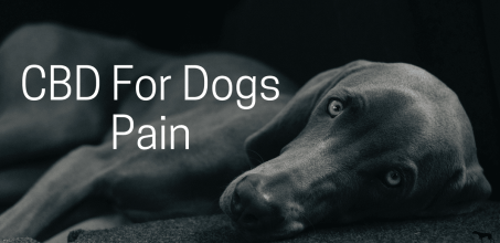 CBD For Dogs Pain