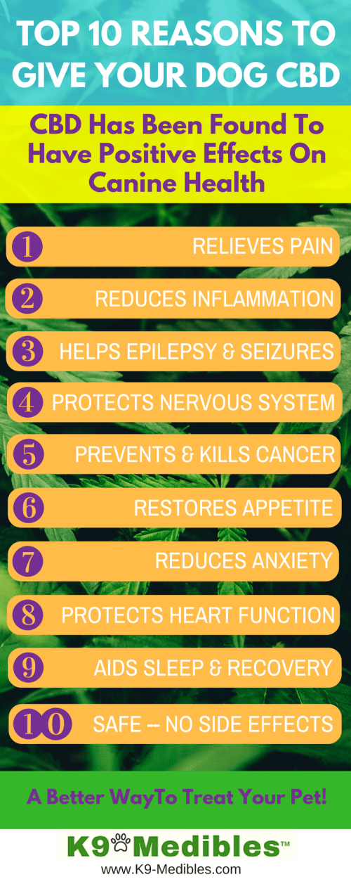 infor graphic Top 10 reasons to give your dog CBD. CBD oil for dogs benefits. CBD oil for dogs benefits. Top 10 reasons to give your dog CBD for dogs allergies. CBD oil for dogs with joint pain. CBD for dogs with cancer. CBD for dogs with anxiety. CBD oil for dogs with lymphoma. CBD oil for dogs poian. CBD oil for dogs with seizures. CBD for dogs epilepsy.