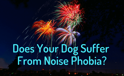 5 Ways To Keep Your Dog Calm During Fireworks