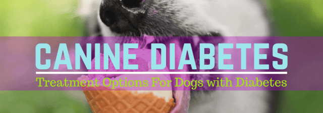 Symptoms of Diabetes in Dogs