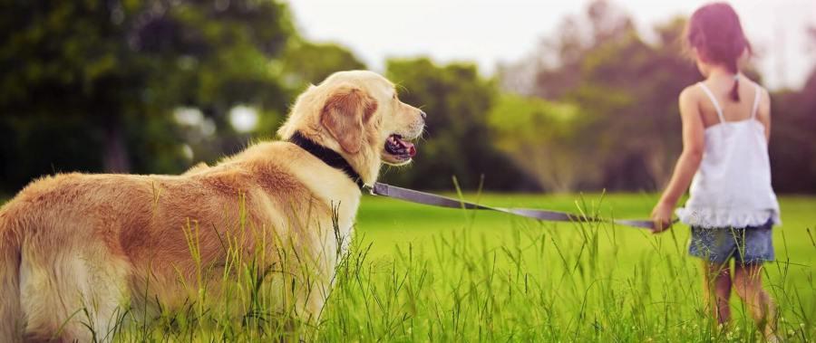 Best hemp oil for dogs