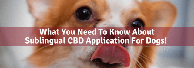 Sublingual CBD Application For Dogs