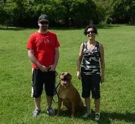 Bull mastiff crossed Doberman Dog Needed Training really bad