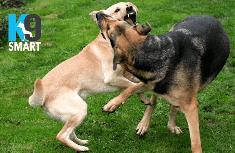 aggression problems with your dog
