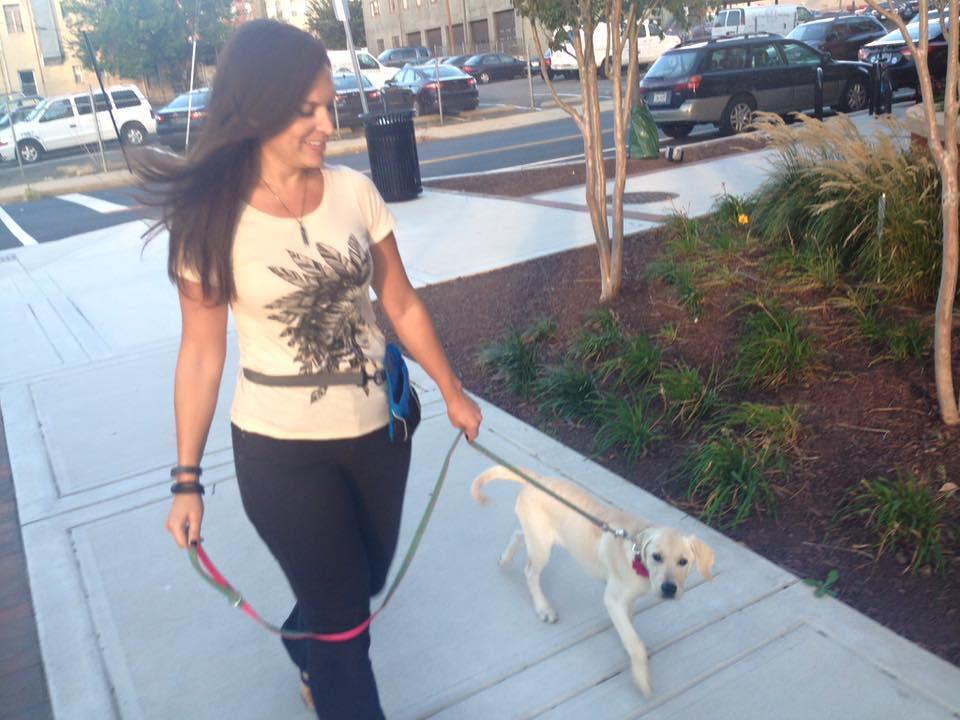 Goldador-dog-training-Alexandria