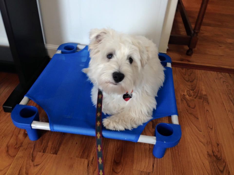 dog-training-Reston-VAdog-training-Reston-VA