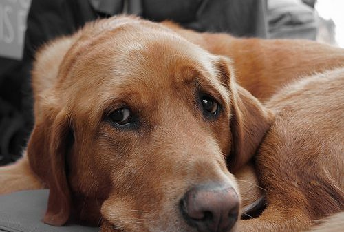 If You Die, Will Your Dog Suffer? How to Include Your Dog in Your Will