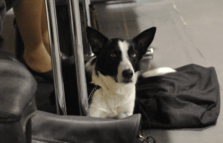 Guide To Travelling Abroad With Your Dog